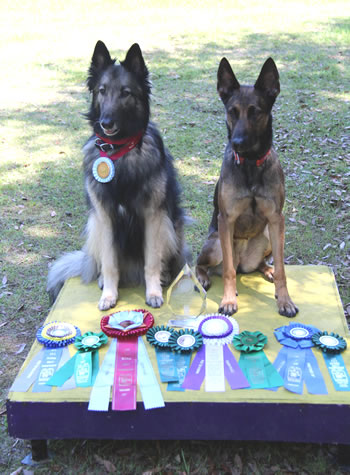 Smartie and Keen and 2014 NAC ribbons
